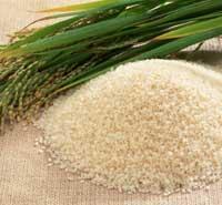 Makanan pendamping bayi dari beras